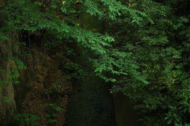 玉川上水6
