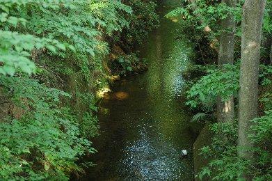 玉川上水7