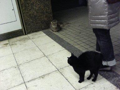 いた、初代飯山満の駅猫、みーすけ