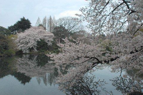 新宿御苑・池