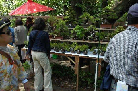 盆栽を見る若い女