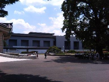 本館前のユリノキ