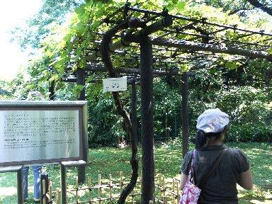 メンデルの葡萄
