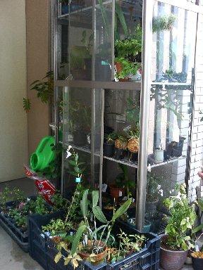 二階入り口の園芸