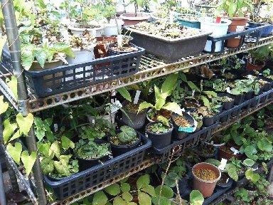 屋上の園芸