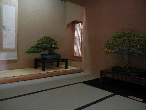 黒松・欅/室内飾り