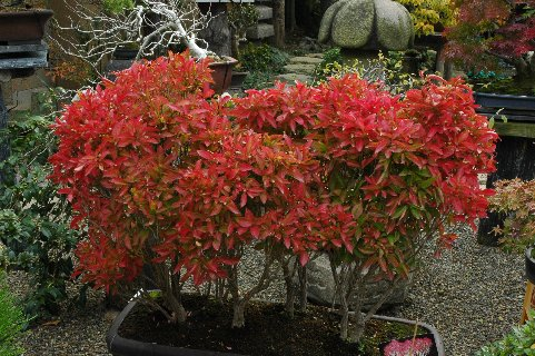 雑木の紅葉