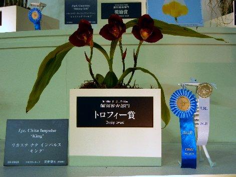 トロフィー賞リカステ
