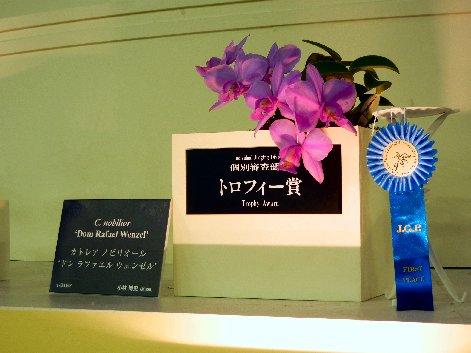 トロフィー賞カトレア