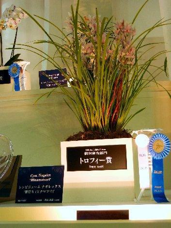 トロフィー賞シンビ
