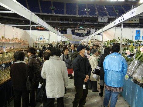 東洋蘭・日本の蘭販売コーナー