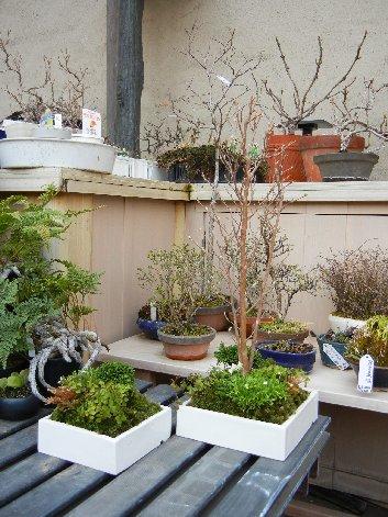 彩花盆栽の例