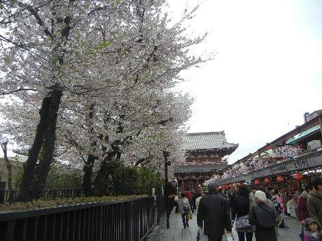 宝蔵門方向に見る仲見世通り脇の桜