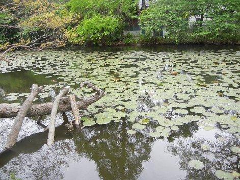 手児奈霊堂の池/元・入り江