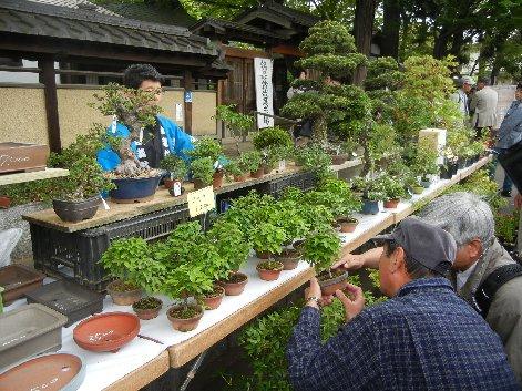 清香園の棚・ケヤキ吟味する人