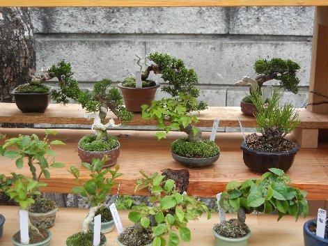 川口bonsai村の小品盆栽