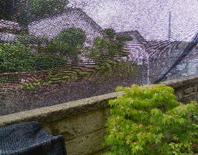 寒冷紗による草木の保護と居間の遮光