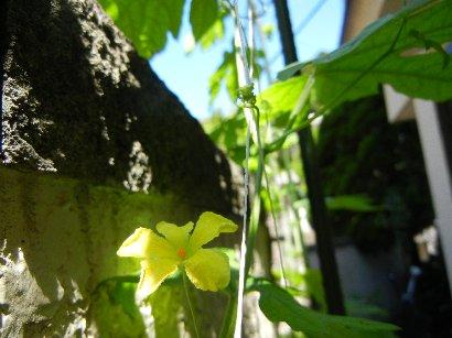 花2輪咲く