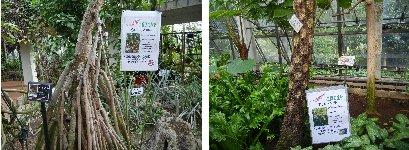 小笠原の植物
