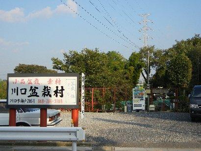 川口盆栽村という名の園芸店