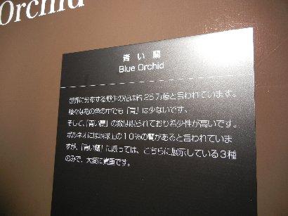 青い蘭の説明書き