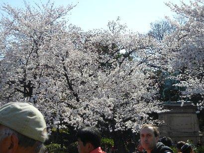 小松宮像前のコマツオトメ
