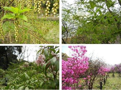 桜以外の花