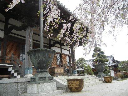 徳願寺・本堂