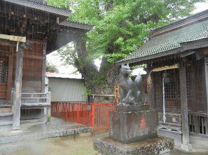 押切稲荷神社・千寿銀杏
