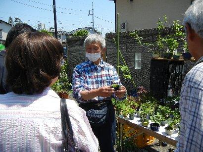 ミニ盆栽の育て方をレクチャーする人