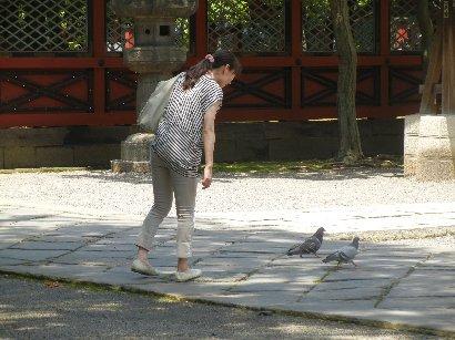ハトと遊ぶ女