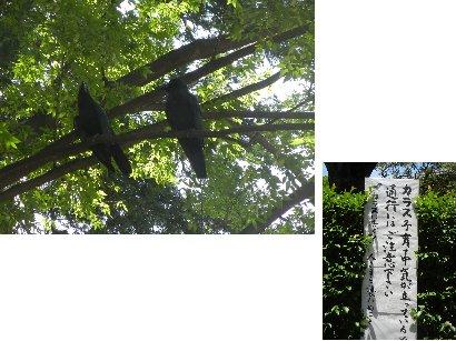根津神社のカラス