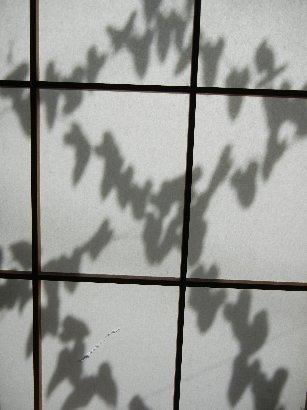 ヤマイモのつるの影
