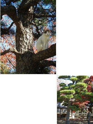 松の木の上の猫と坊さん