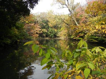 紅葉する三四郎池