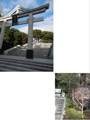 山王橋側の山王鳥居と西参道側の冬桜