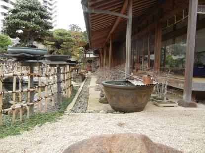 軒下に置かれた雑木盆栽