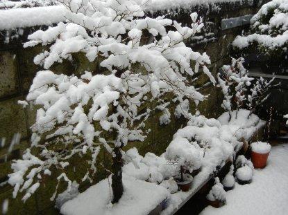 山もみじと雪