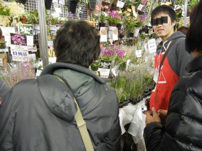 洋蘭販売エリア・超格安店