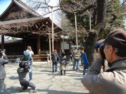 桜開花宣言と靖国神社