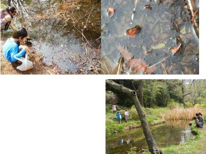 オタマジャクシや鯉と遊ぶ子ら