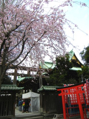牛島神社のベニシダレ