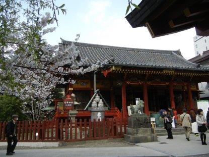 浅草神社の桜