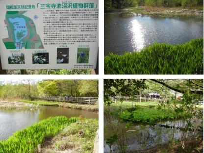 沼沢植物群生