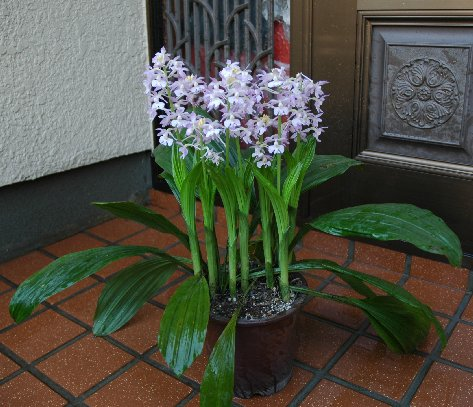 2004の花姿