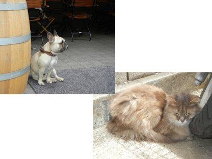 神楽坂の犬と猫