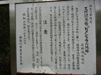 ヒメシャラの純林・説明版