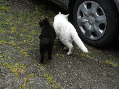 仲良しの、白と黒の猫