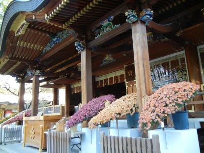 湯島神社・菊・本殿前