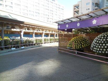 湯島神社・菊・本殿裏